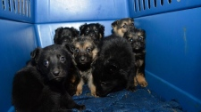 Dogs rescued from High Level, Alta. (AARCS)