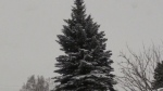 CTV Northern Ontario: When a Tree Falls
