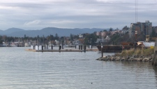 The money will be spent on a second mooring dolphin, which will allow larger ships to visit the area. Nov. 18, 2017 (CTV Vancouver Island)