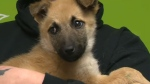 One of the puppies rescued from a landfill near High Level on Monday night