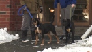Two dogs left to fend for themselves in a south end apartment are freed on Monday, Nov. 20, 2017.