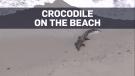 2-metre crocodile shows up on beach