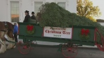 Extended: Official tree arrives at White House