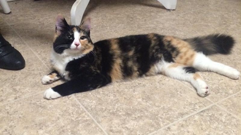 Gigi, cat allegedly fed MDMA