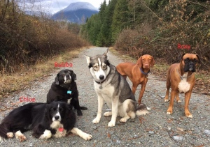 Coquitlam SAR posted this photo to Twitter showing the missing dogs: Roxy, Bubba and Chloe.