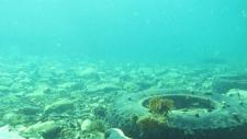 CTV News Channel: Ocean dumping in N.L.