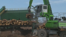 Digging deeper into forestry sector case