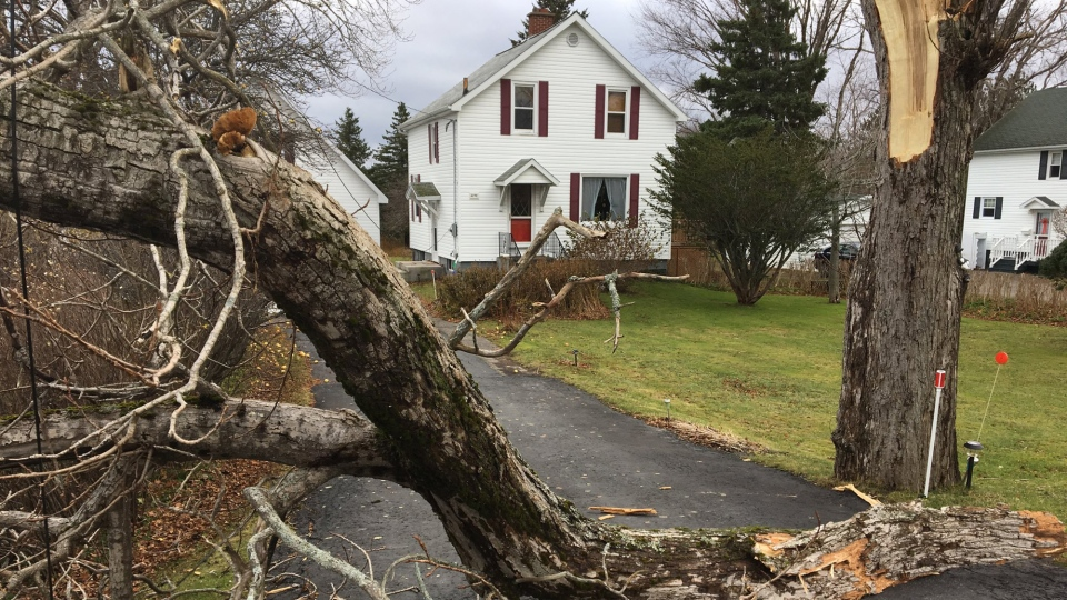 Strong winds knocked this tree and some power lines down in Reserve Mines, N.S., trapping the homeowner, on Nov. 23, 2017.