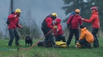 Search and rescue volunteers are seen after dog walker Annette Poitras and the three dogs she was walking when she went missing were rescued from Eagle Mountain, in Coquitlam, B.C., on Wednesday November 22, 2017. (THE CANADIAN PRESS / Darryl Dyck)