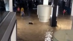 jamaica flooding