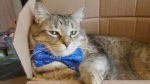 Eddie, a cat known in online circles for sporting a dapper bow tie, has raised more than $500 for an Ontario animal shelter.