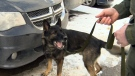 RCMP dog rescues lost hunters