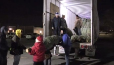 Trees are unloaded by volunteers at the annual Christmas Tree Sale organized by the Scouts.