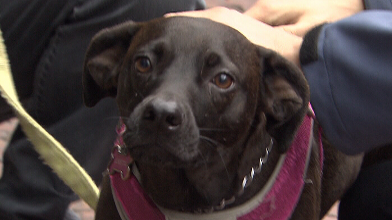 Three-year-old Loretta started acting paranoid after returning from a walk at Kitsilano Beach.