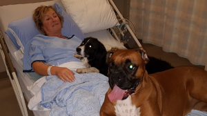 Rescued dog walker reunited with furry pals