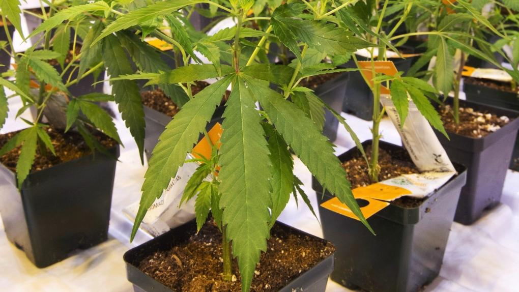 Aurora stops building Medicine Hat pot facility to save money