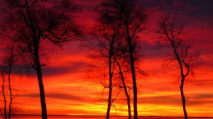 Amazing colours this morning in Buffalo Point. Photo by Carol Shultz.