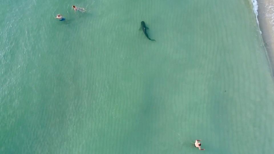 A shark swims near South Beach in Miami, Fla., on Friday, Nov. 24, 2017. (Kenny Melendez/Storyful)