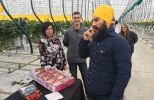 NDP Leader Jagmeet Singh toured Mucci Farms this m