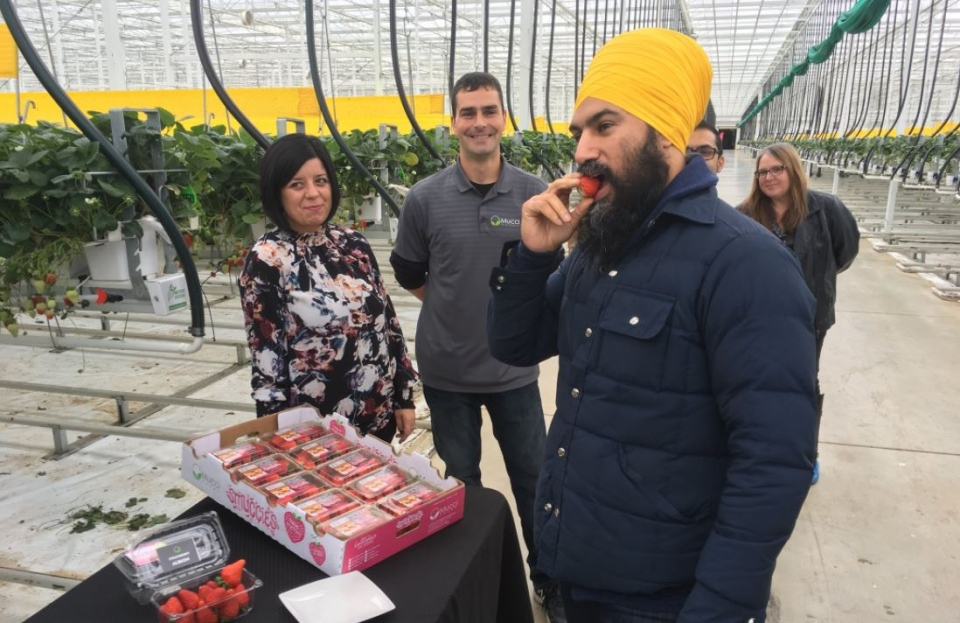 NDP Leader Jagmeet Singh tours Mucci Farms near Kingsville, Ont. on Saturday, Dec. 2, 2017. (Chris Campbell / CTV London)