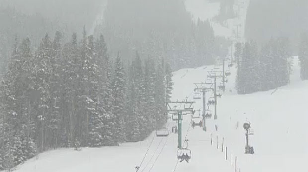 Lake Louise Ski Area Ltd. has admitted to cutting down a number of endangered trees near one of its ski runs in 2015.