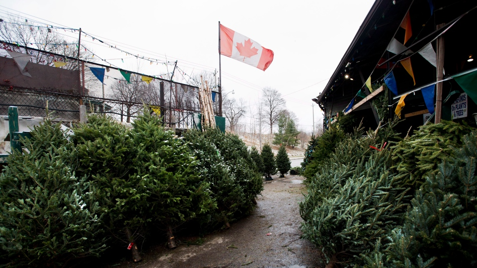 A Christmas tree shortage among U.S. suppliers is affecting prices right across B.C.