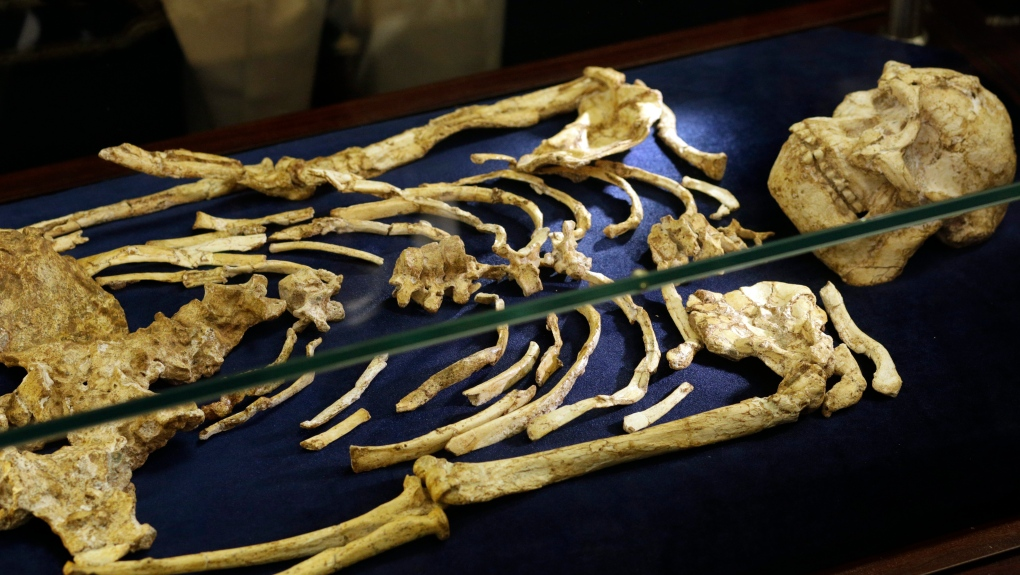 Rare skeleton