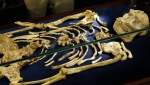 A virtually complete Australopithecus fossil is displayed at the University of the Witwatersrand in Johannesburg, South Africa, Wednesday, Dec. 6, 2017. (AP Photo/Themba Hadebe)