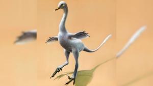 Dinosaur duck