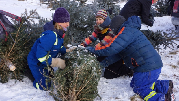 Nature Conservancy of Canada - Christmas tree