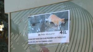 Deer Run anti-cat poster