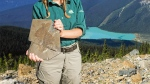 A Parks Canada employee showing a Burgess Shale fossil at Yoho National Park. In 2016, a hiker was arrested by a Parks Canada warden after finding a Burgess Shale fossil hidden in their backpack. (Parks Canada / Twitter)