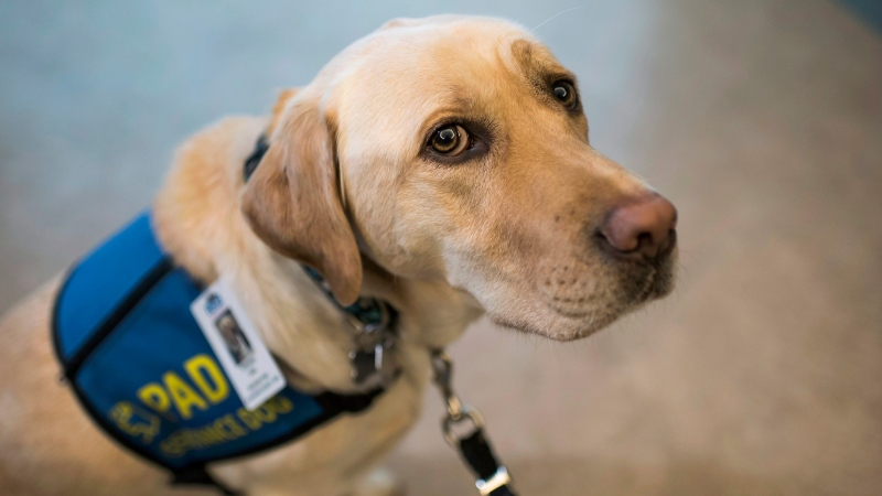 """""""Dorado was an amazing dog. I've never ever met another dog quite like him,"""" said Kathy Bourgeois, a social worker with the Seastar Child and Youth Advocacy Centre."""