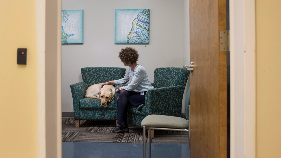 Dorado, the first accredited facility dog in Atlantic Canada, rests in a child trauma interview room with his handler Kathy Bourgeois in Halifax on Friday, December 8, 2017. (THE CANADIAN PRESS/Darren Calabrese)