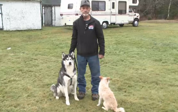 Ken Waidson says his dogs were lucky to survive after being attacked by coyotes on his property last week.