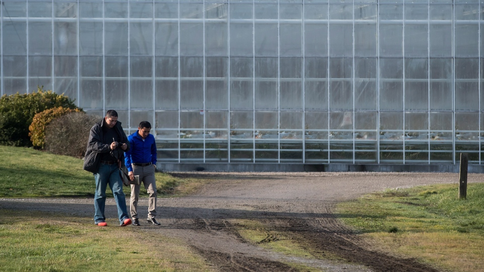 Workers leave a housing area at Windset Farms in Delta, B.C., on Sunday December 10, 2017. According to the B.C. Ambulance Service approximately 43 people required treatment on Saturday after being exposed to carbon monoxide in a greenhouse at the farm. (THE CANADIAN PRESS/Darryl Dyck)