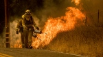 Firefighters light backfire while trying to keep a wildfire from jumping Santa Ana Road near Ventura, Calif., on Saturday, Dec. 9, 2017. (AP / Noah Berger)