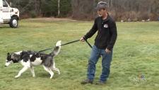 Ken Waidson and his husky