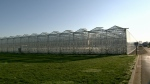 Greenhouses are seen at Windset Farms in Delta, B.C. in this image from Monday, Dec. 11, 2017.