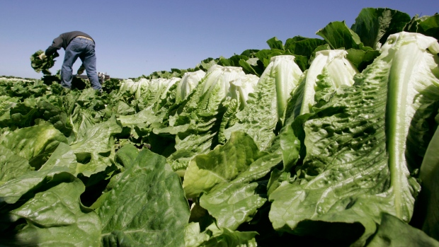 In this Aug. 16, 2007 file photo, a worker harvests romaine lettuce in Salinas, Calif. (Paul Sakuma/AP Photo)