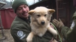 Dogs rescued from meat farm arrive in Cambridge