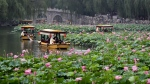 Boatmen take tourists for a ride around the water lily plants on Beihai Park in Beijing, China Tuesday, July 4, 2017. (AP Photo/Andy Wong)