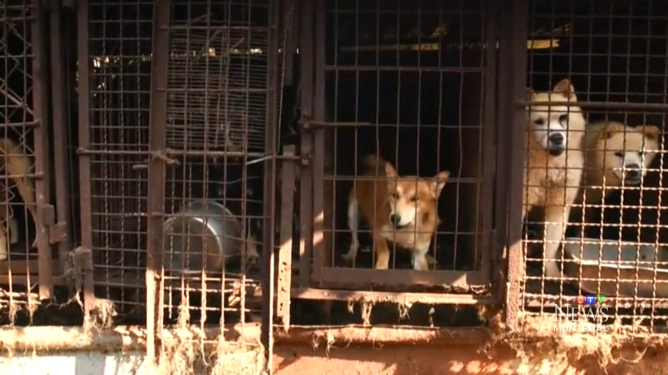 More than 170 dogs that were rescued from a shuttered South Korean dog meat farm and taken to Canada and the U.K.