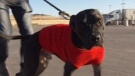 Frankie the dog was found in Langley, B.C., more than 1,200 kilometres from his Alberta home. He was reunited with his owner thanks to a dog-loving truck driver.