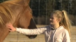 Half dozen stolen horses returned