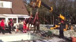 Extended: Horse rescued from empty pool
