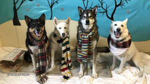 From left to right are Jackson, Sura, Thorne and Keisha. (Cheryl Caswell/CTV Viewer)