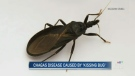 Warning after Winnipeggers get 'kissing bug'