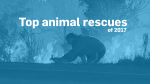 Year in Review: Top animal rescues of 2017
