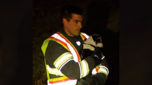 Puppy left in vehicle that crashed down ravine